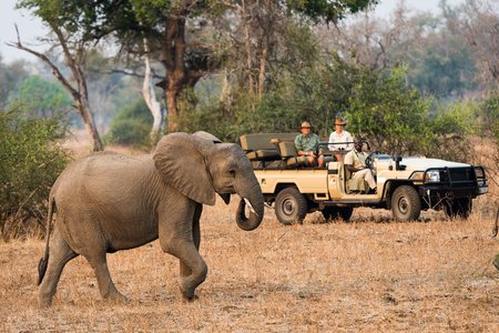 Sambia Safaris